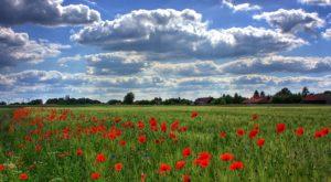 brandenburg - endlose weiten